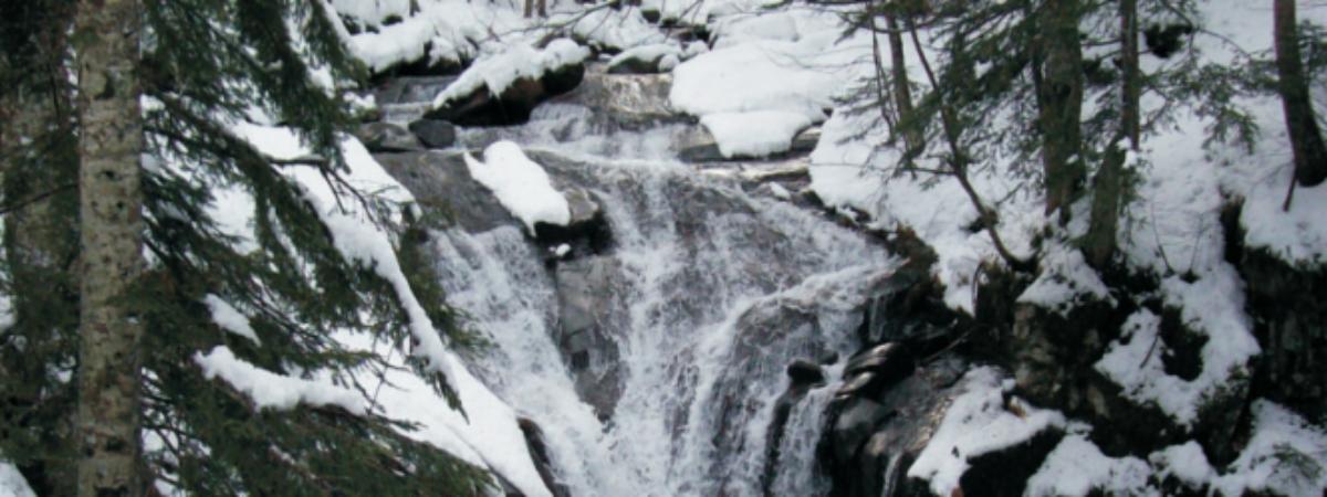 Boschi e torrenti di montagna: problema o risorsa ambientale ed economica?